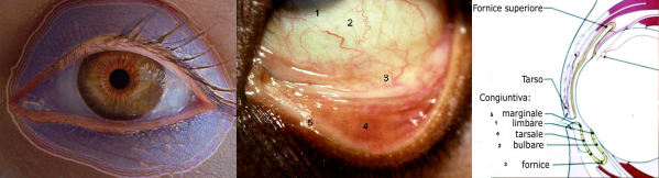Congiuntivite e occhio rosso: l'infiammazione della congiuntiva