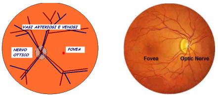 Esame retina occlusione vascolare